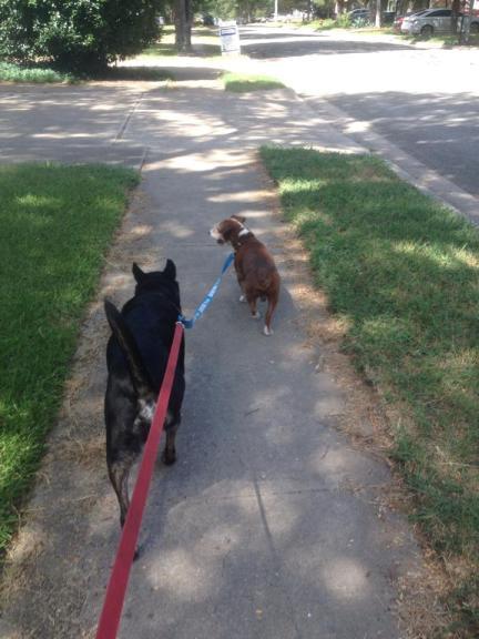dogwalking