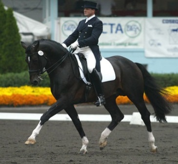 "Kinny in his ""real life"" as a Grand Prix dressage horse"