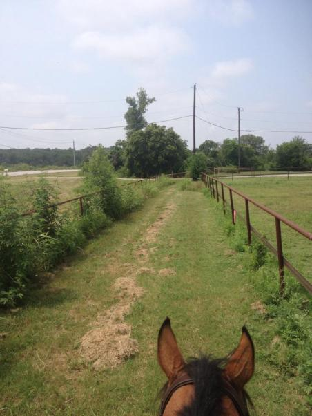 between the road and the front pasture