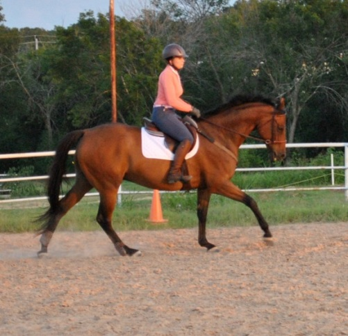 canter3