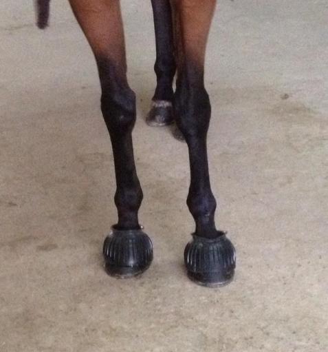shoesAug