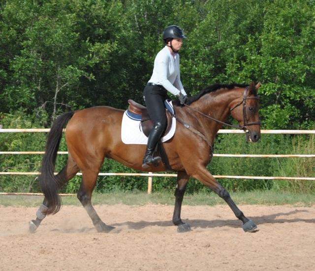 Review Aztec Diamond Equestrian Breeches