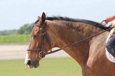 fathorse