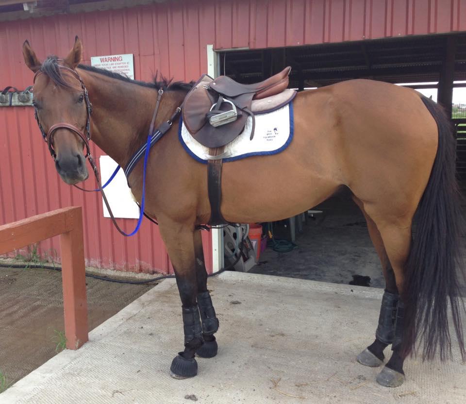 Fancy Dress Horse Head