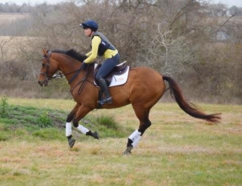 gallop2