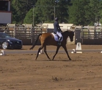 cocodressage2