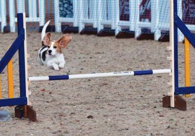 beaglejump