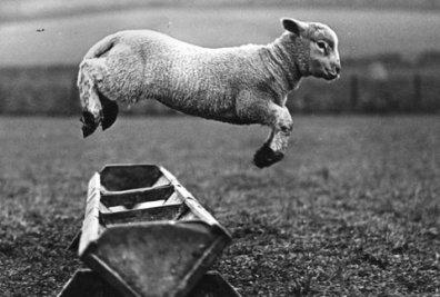 lambjump