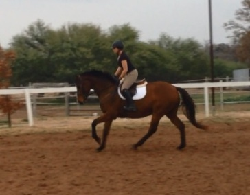 canter1