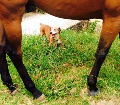 stewiehorse