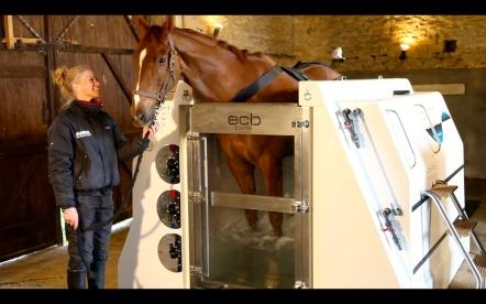Image result for horse salt water spa