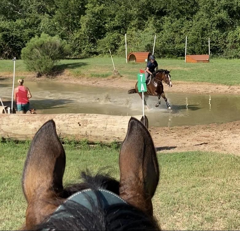 Basicamente, um cavalo de evento 2