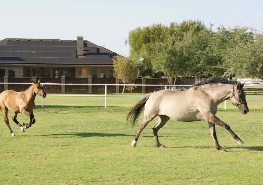 Foal Friday: Glamour Shots da Oakley 13