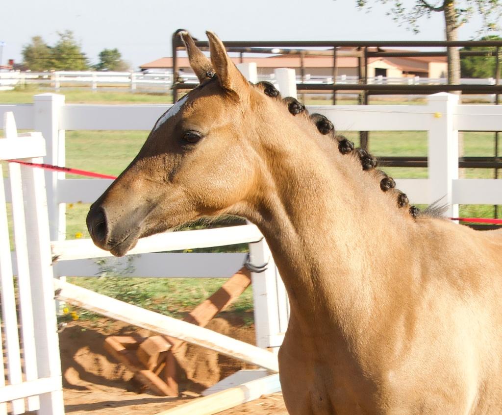 Foal Friday: Glamour Shots da Oakley 1