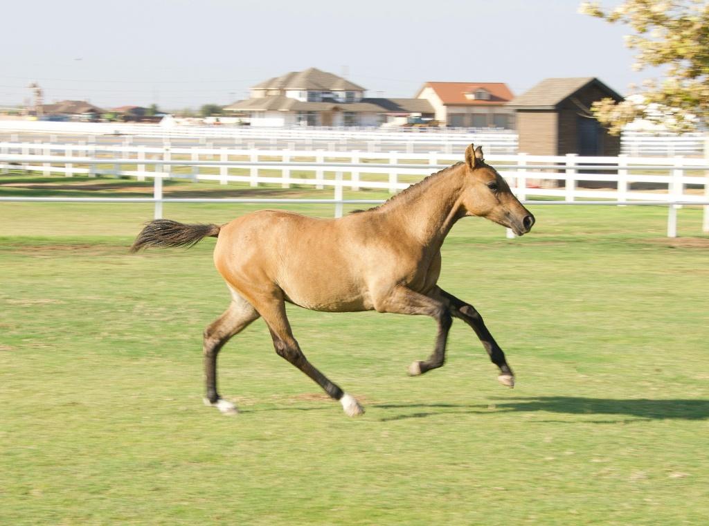Foal Friday: Glamour Shots da Oakley 11
