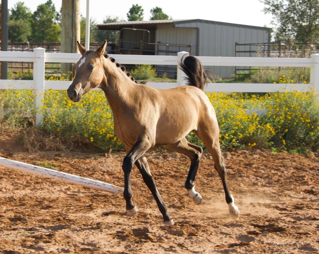 Foal Friday: Glamour Shots da Oakley 9