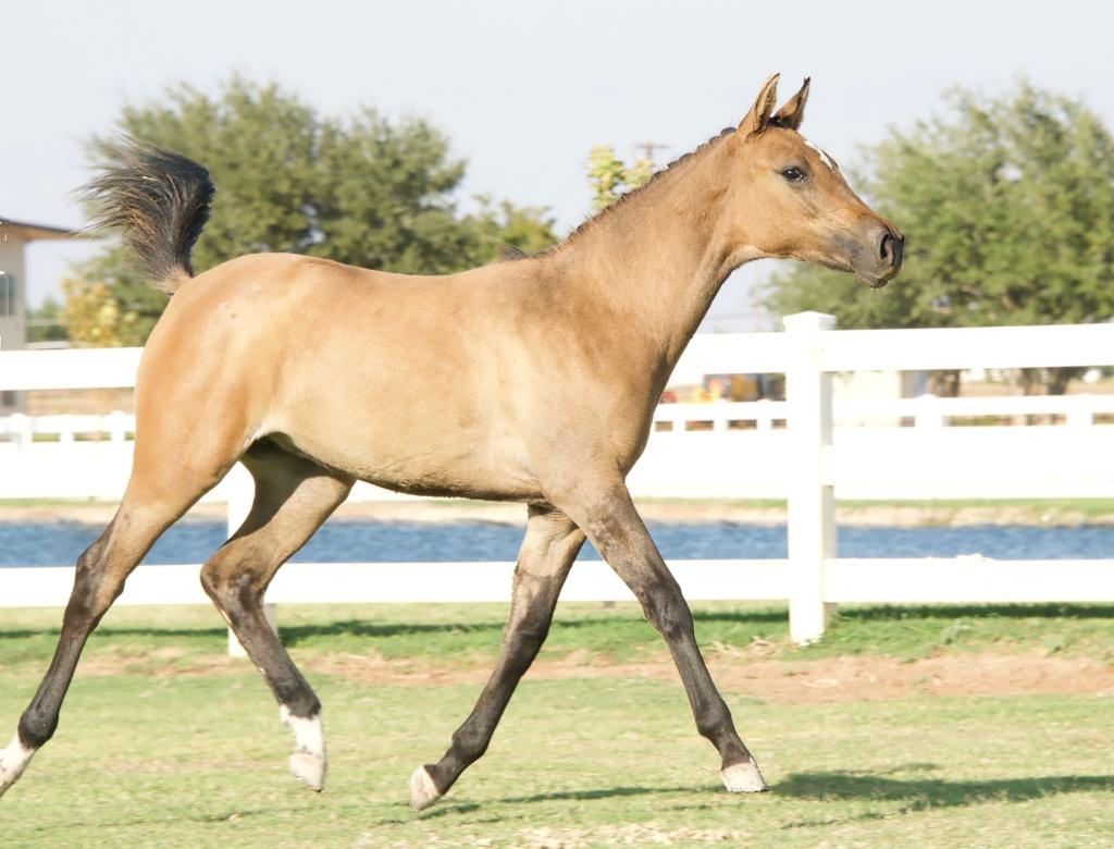 Foal Friday: Glamour Shots da Oakley 2