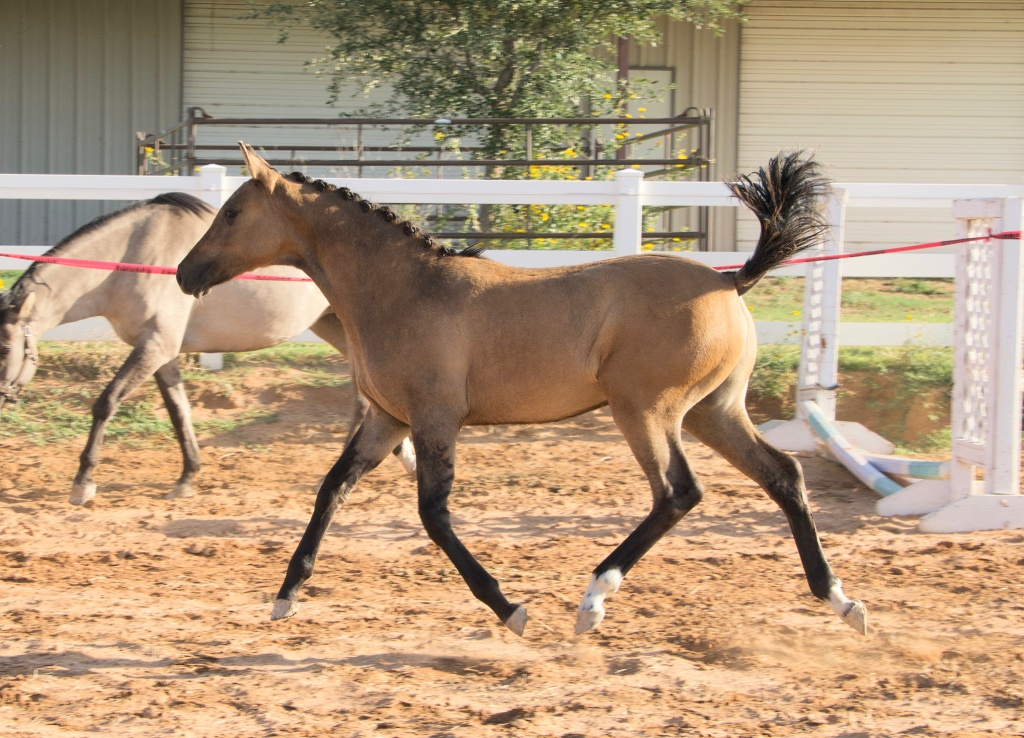 Foal Friday: Glamour Shots da Oakley 6