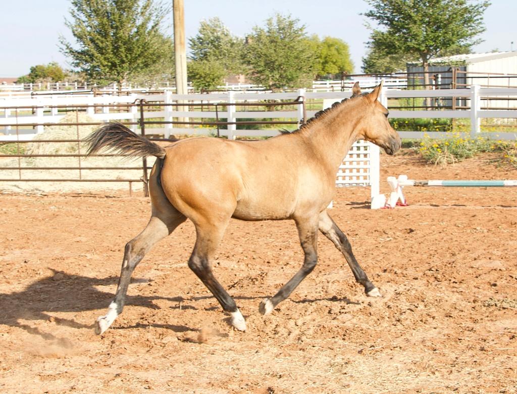 Foal Friday: Glamour Shots da Oakley 4