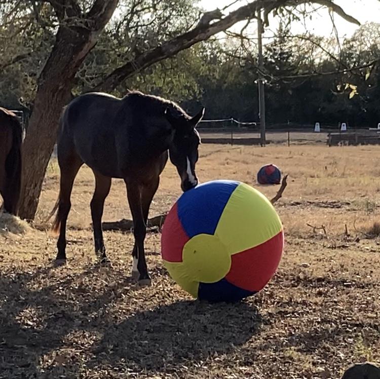 Presto e a bola gigante 2