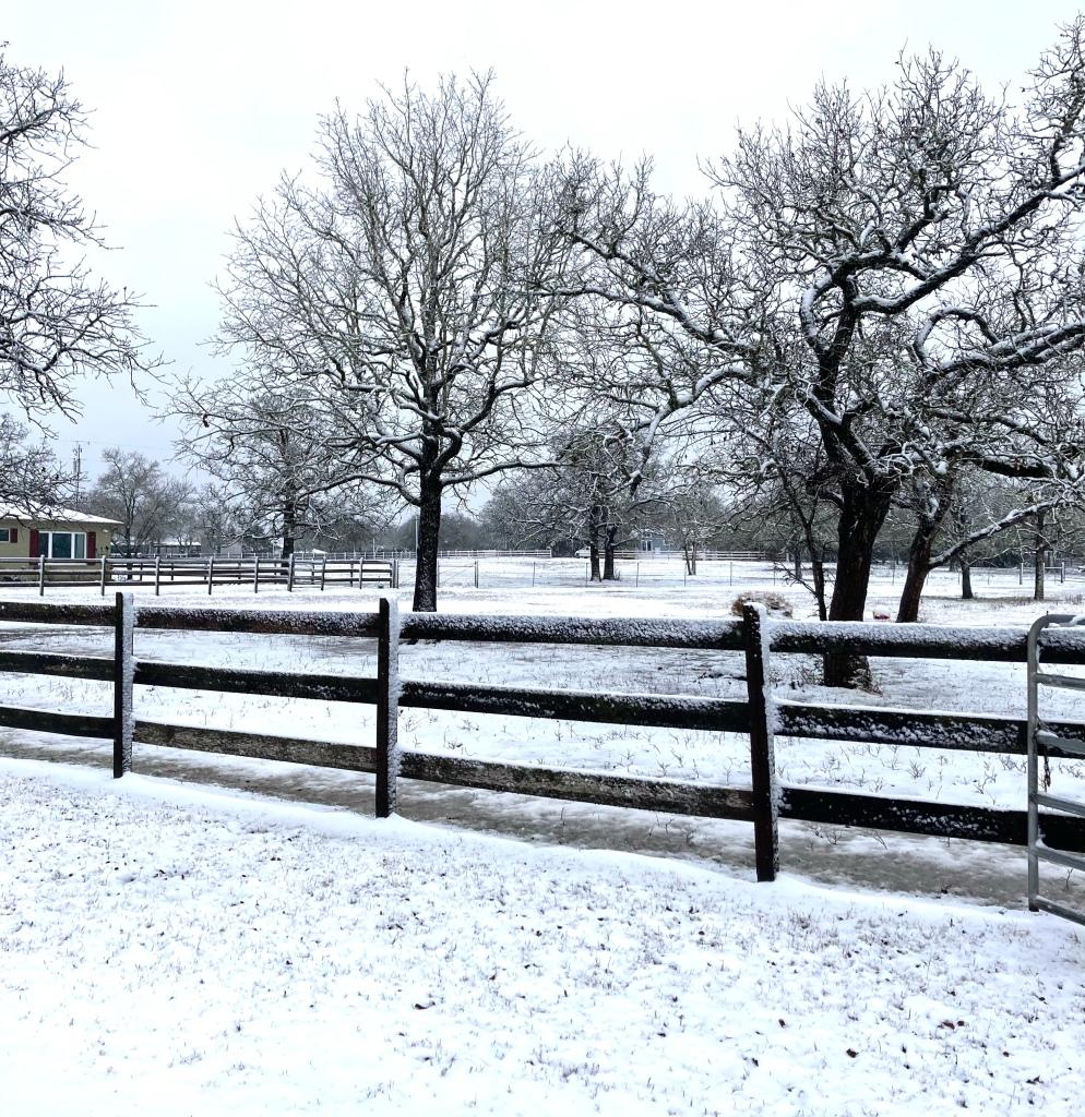 Dia da Neve no Texas 1
